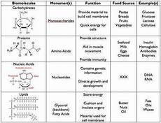 biological molecules worksheet homeschooldressage com