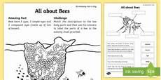 all about bees worksheet worksheet teacher made