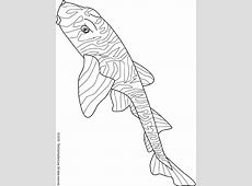 Zebra Bullhead Shark Coloring Page   Audio Stories for