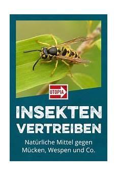 lavendel gegen wespen insekten vertreiben mittel gegen m 252 cken wespen und co