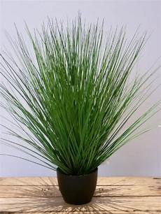 ziergräser im topf ziergras ab 50 cm kunstpflanze de
