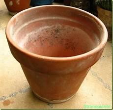 vasi in plastica grandi dimensioni quali vasi comprare per le piante grasse