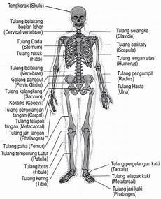 Welcome Penyusun Rangka Manusia Bio