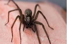 spinnen bek 228 mpfen so gehen sie gegen die achtbeiner vor