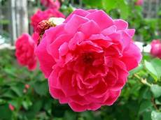 nomi fiori giapponesi fiori orientali fiori di piante fiori asiatici