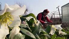 sommerblumen nicht zu fr 252 h pflanzen erst die eisheiligen
