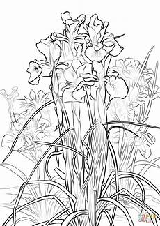 iris coloring page free printable coloring pages