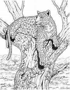 leopard free colouring pages