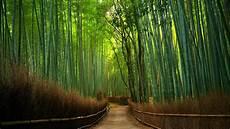 Rute Dan Harga Tiket Masuk Hutan Bambu Keputih Spot