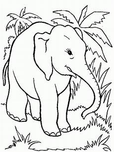 page elephant coloring pages printable elephant