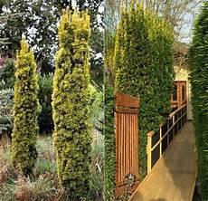 Welche Pflanzen Als Sichtschutz - hoher sichtschutz garten pflanzen real garten