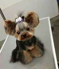 cute yorkie haircuts