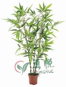 lucky bambou artificiel 95cm d imitation arbre de bambou pour la d 233 coration
