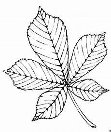 Gratis Malvorlagen Blatt Fuenfteiliges Blatt Ausmalbild Malvorlage Blumen