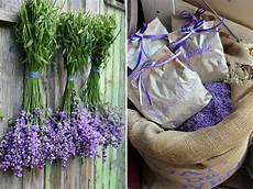 Lavendel Kreativ Gartenzauber