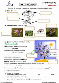 plant kingdom worksheets for grade 2 13758 plant kingdom ficha interactiva