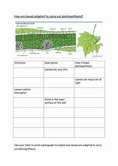 adaptations of leaves for photosynthesis teaching resources