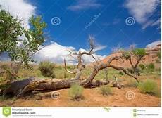 arbre mort achat arbre mort sur la terre en utah photo stock image 43063214
