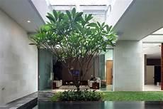 arbre d interieur design construire tout en pr 233 servant les arbres terre meuble