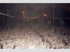 how many turkeys sold thanksgiving