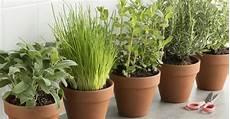 kräuter anpflanzen wohnung diese 5 kr 228 uter und gem 252 sesorten kannst du im haus anbauen
