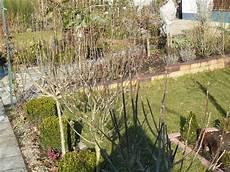 hibiskus hochstamm schneiden mein sch 246 ner garten forum