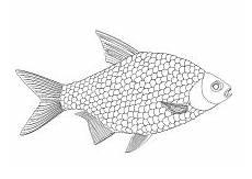 malvorlage fisch mosaik fisch