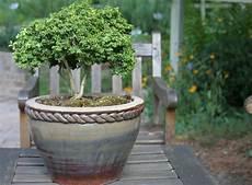 winterharte k 252 belpflanzen das gr 252 n im garten erhalten