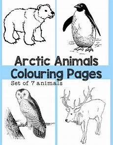 arctic animals printable coloring pages 17219 arctic animals colouring pages arctic animals artic animals polar coloring page