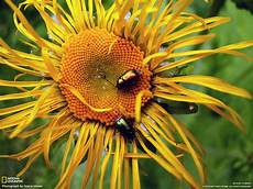 flower wallpaper on desktop wallpapers flowers wallpapers by national geographic