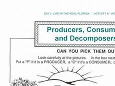 plants as producers worksheets 13617 producers and consumers and decomposers worksheet for 1st 4th grade lesson planet