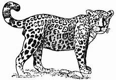 Malvorlagen Jaguar Tiere Jaguar Coloring Pages For Jaguar Colouring Pages For