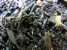 ameisen im beet bitte um hilfe der identifizierung kleine weisse