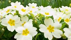 White Flowers Hd Images by Flower Hd Wallpaper Background Image 1920x1080 Id
