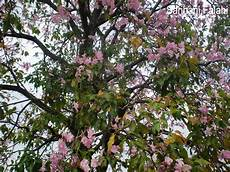 Hati Berdetik Dan Berbisik Pokok Di Tepi Jalan