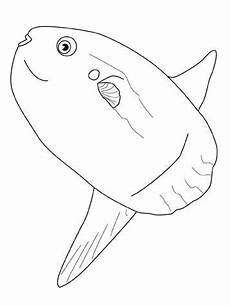 malvorlagen fische quest kinder zeichnen und ausmalen