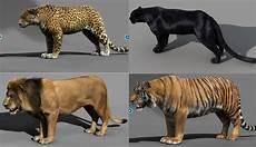 Panther Jaguar Hybrid Buscar Con Felines