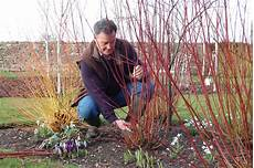 when to prune plants shrubs and trees