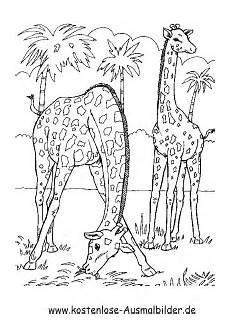 ausmalbilder jungle tiere ausmalbilder giraffen im dschungel tiere zum ausmalen