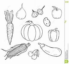 set of vegetables stock vector illustration of lined