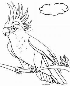 parrot drawing at getdrawings free