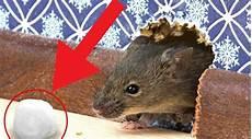 3 Astuces Pour Se D 233 Barrasser Des Rats 224 La Maison