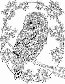 owl coloring pages at getcolorings free