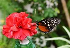 Malvorlage Schmetterling Blume Schmetterling Blume Foto Bild Tiere Wildlife