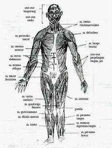 Otot Penyusun Tubuh Manusia