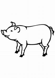 Ausmalbilder Schweine Bauernhof Ausmalbild Schwein 3 Zum Ausdrucken