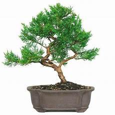 2210 best gardening bonsai trees 盆栽 penzai بونساي