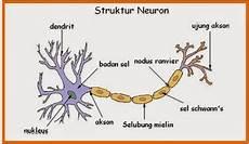 Indikator 14 Erudio Scientia Biology