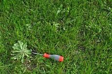 schlingpflanze unkraut pflanzen f 252 r nassen boden