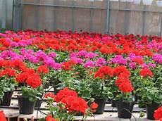 fiori vendita fioraio modena rubiera vivaio vendita fiori freschi
